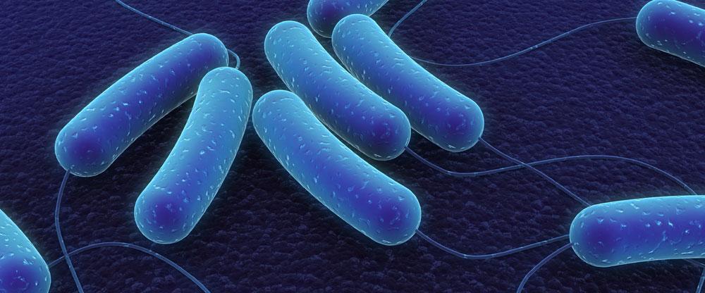 Bacillus image